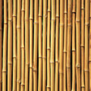 Dry Bamboo Rows Poster