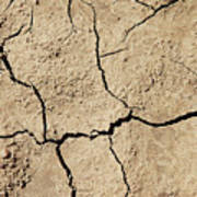 Dry Cracked Earth And Green Leaf Poster