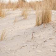 Dry Dune Grass Plants Poster
