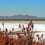 Dry Grasses At The Great Salt Lake Poster