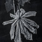 Dry Leaf Collection Bnw 2 Poster
