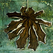 Dry Leaf Collection Wall Poster