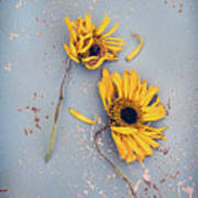 Dry Sunflowers On Blue Poster
