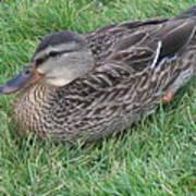 Duck 2 Poster