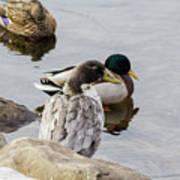 Duck, Duck Poster