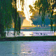 Duck Pond At Dawn Poster