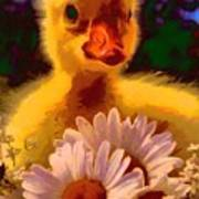 Fuzzy Duckling And Daisies Poster