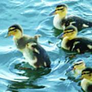 Ducklings Digital Water Color Poster