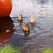 Ducks Mooning Poster