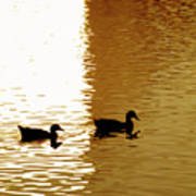 Ducks On Pond 2 Poster