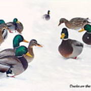 Ducks On The Snow Poster