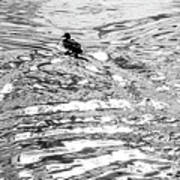 Ducks Swirl Poster