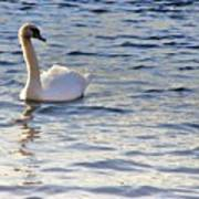 Duddingston Swan 1 Poster