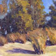 Dune Grasses Poster