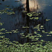 Dusk In The Swamp Poster