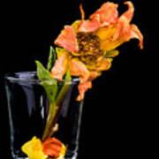 Dying Dahlia Flower Poster