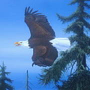 Eagle At Treetop Level Poster