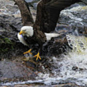 Eagle Catches Fish Poster