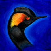 Eared Grebe Duck Poster