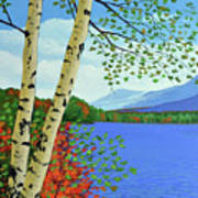 Early Autumn Birches Poster