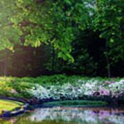 Early Morning Light At The Azalea Pond Poster