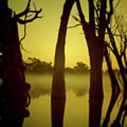 Early Morning Mist At The River Poster