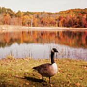 Earth Tone Autumn Pond Goose Poster