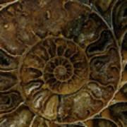 Earth Treasures - Brown Amonite Poster