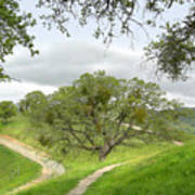East Ridge Trail -  Spring Poster