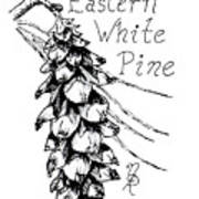 Eastern White Pine Cone On A Branch Poster