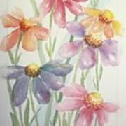 Echinacea Cheyenne Spirit Poster