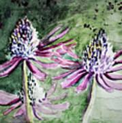 Echinacea Cone Flower Poster