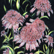Echinacea Pinks Poster