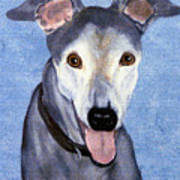 Eddie - Greyhound Poster