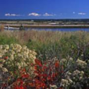 Edgartown Lighthouse Autumn Flowers Poster