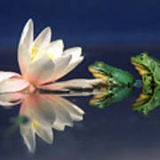 Edible Frog Rana Esculenta Two Frogs Poster