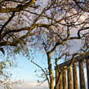 Edinburgh - Caption Hill Trees Poster
