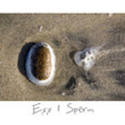 Egg And Sperm Poster by Peter Tellone