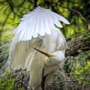 Egret - 2975 Poster