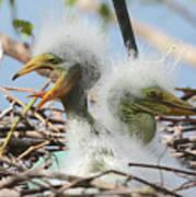 Egret Chicks In Nest With Egg Poster