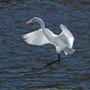 Egret Fishing Poster