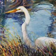 Egret In Cameron Marsh Poster