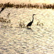 Egret In Sunset Water Poster