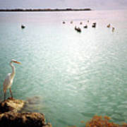 Egret On Marathon Key Poster