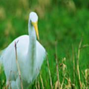 Egret Stare Down Poster