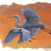 Egrets Great And Snowy Poster