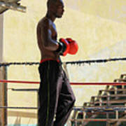 El Boxeador Poster by Dawn Currie