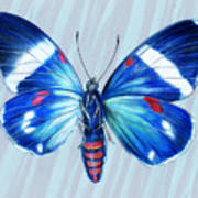 Electric Blue Moth Poster