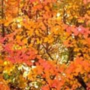 Elegant  Autumn Poster