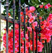 Elegant Fence Poster